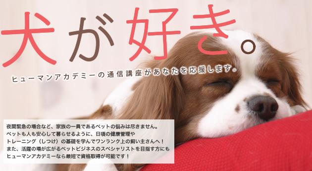 犬が好き。ヒューマンアカデミーの通信講座があなたを応援します。ペットに関する資格ならお任せ下さい!
